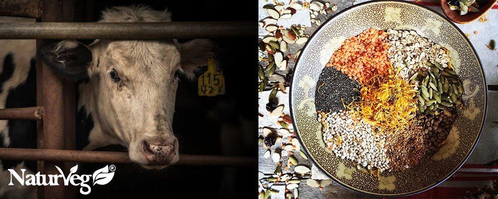 Proteine Vegetali o Animali quali scegliere