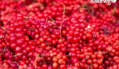 schisandra naturveg vitamina c