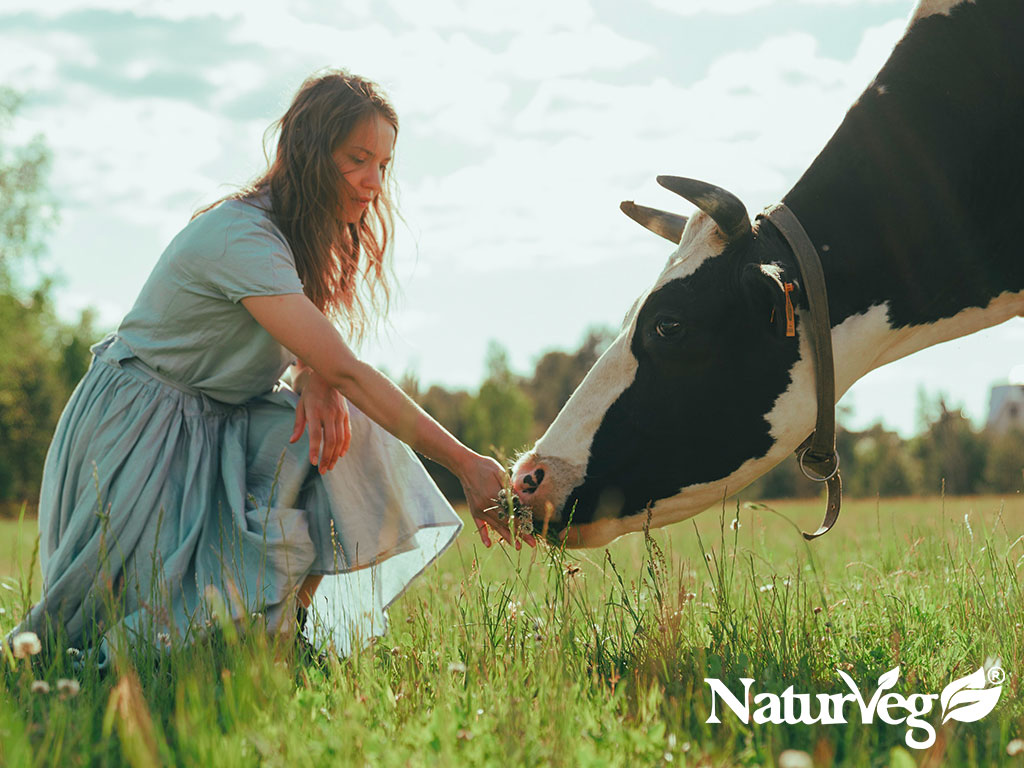 Differenze tra proteine animali e vegetali   Naturveg